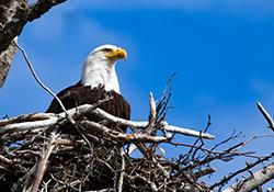 Eagle Watching Trip