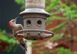 Feeders and Feathered Friends