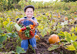 Home School Day: Harvest at Fosterfields