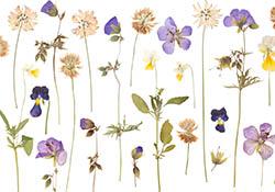 Make & Take: Botanical Pressing Series Part 1