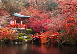 The Japanese Garden Festival