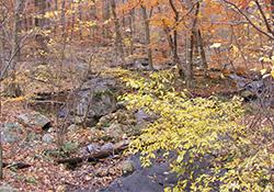 Leaf Peeping Hike