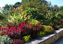 Let's talk Perennials