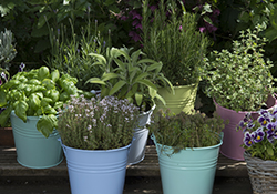 Make and Take Workshop: Early Spring Container Garden