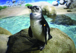 VIRTUAL DAY OFF WITH NATURE: PENGUIN-PALOOZA!