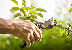 Pruning Workshop with the Gardeners at Willowwood Arboretum