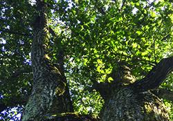 Photo Scavenger Hunt: The Secrets of Trees