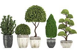 The Art of Topiary Design