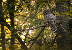 Virtual Day Off with Nature: Amazing Owls!
